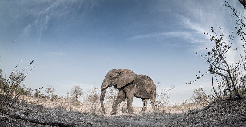 Wim van den Heever - Elephant7090