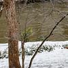 Falling Creek Snowfall
