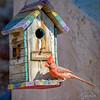 Cardinal and Rainbow House, Arizona