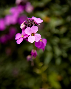 wallflower-2