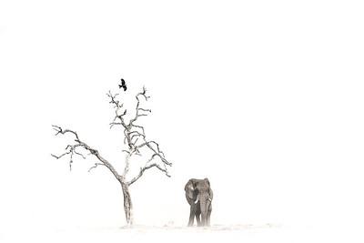 Wim van den Heever - Elephant7033