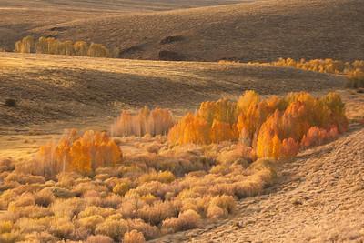 AutumnFlamesLight