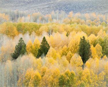 AutumnLandscape