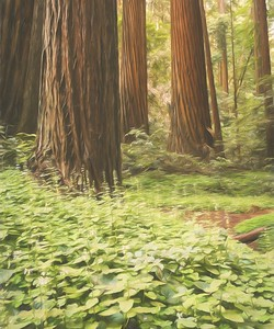 California Redwood Forest