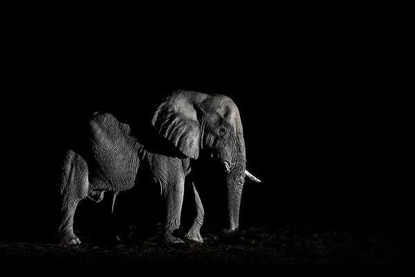 Wim van den Heever - Elephant3709