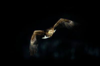 Wim van den Heever - Eagle48406