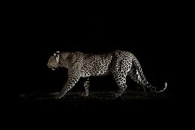 Wim van den Heever - Leopard0521