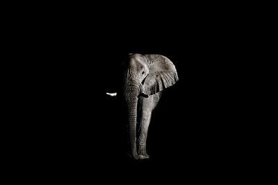 Wim van den Heever - Elephant2091