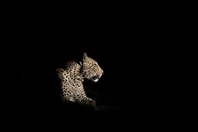 Wim van den Heever - Leopard5330