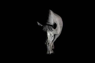 Wim van den Heever - Rhino6837