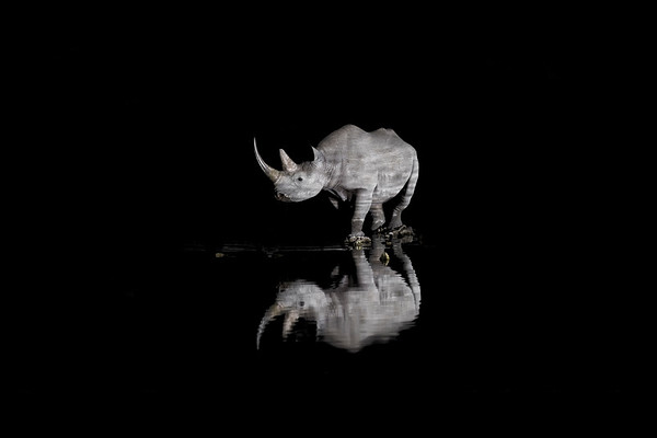 Wim van den Heever - Rhino3602
