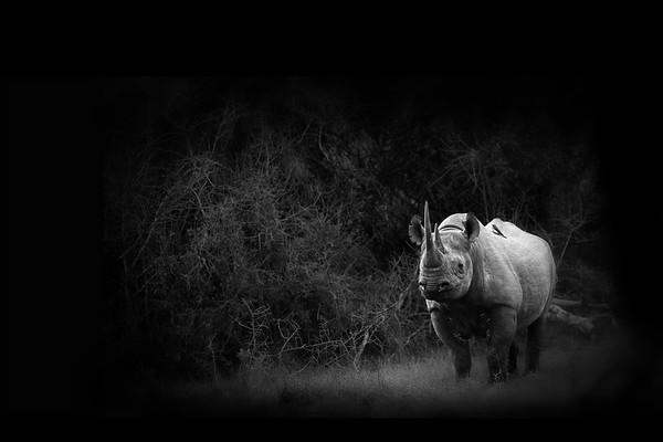 Black Rhino Forest