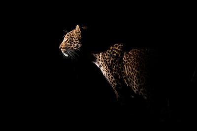 Wim van den Heever - Leopard3854