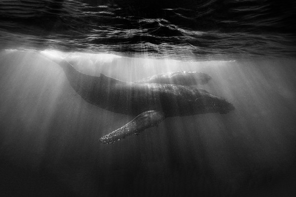 Wim van den Heever - Whale3933