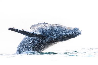Wim van den Heever - Whale6534