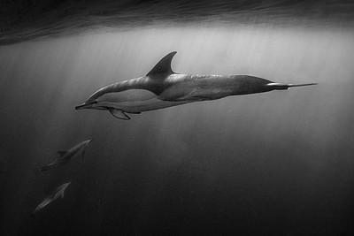 Wim van den Heever - Dolphin3315