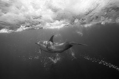 Wim van den Heever - Dolphin3457