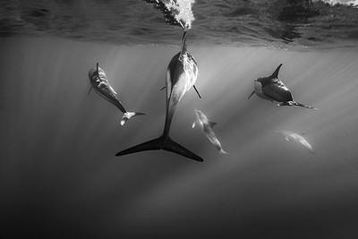 Wim van den Heever - Dolphin3465