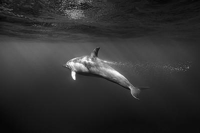 Wim van den Heever - Dolphin4475