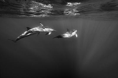 Wim van den Heever - Dolphin3385