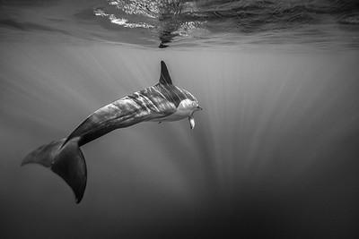 Wim van den Heever - Dolphin3486