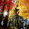 Autumn Colors Mogollon Rim Arizona