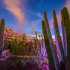 Electric Desert Light Show, Desert Botanical Gardens, Phoenix AZ