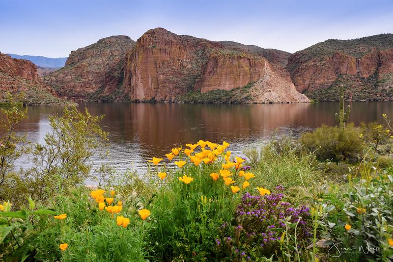 Wildflowers Canyon Lake Arizona