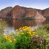 Wildflowers Canyon Lake Arizona