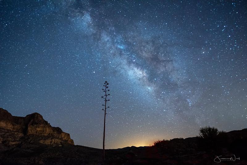 Lone Agave Stalk and Milky Way, Arizona