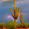 Saguaro with Lightning Gold Canyon AZ