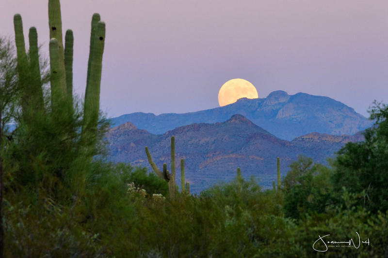 Super Moon Rising Desert near Superstition Mtns AZ