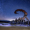 Scorpion and Star Trails,  Anza Borrego California
