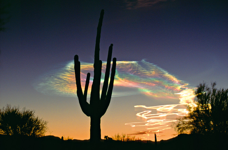 Saguaro with Missile Vapor Trails, AZ