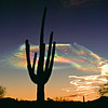 Saguaro with Missile Vapor Trails, AZ