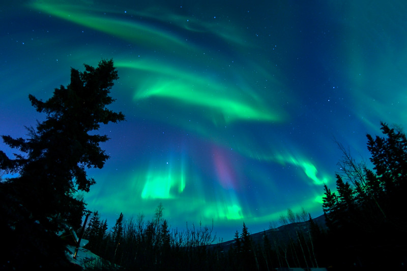 Curtains of Color, Aurora Borealis Fairbanks Alaska