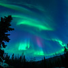 Curtains of Color, Aurora Borealis Fairbanks Alaska