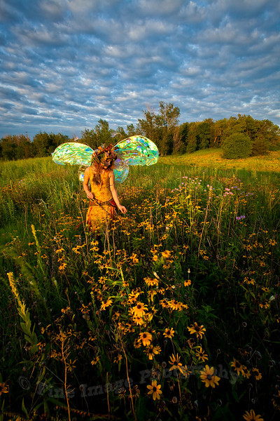 """""""TWIG THE FAIRY:  AMONG THE WILDFLOWERS"""""""