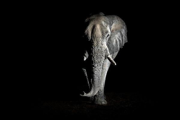 Wim van den Heever - Elephant3660