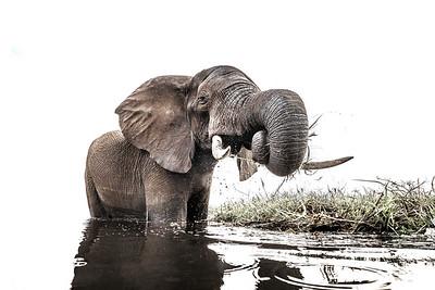 Wim van den Heever - Elephant7224