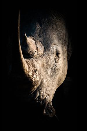 Wim van den Heever - Rhino0280