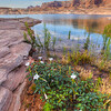 Water Rising Cove with Flowers, West Canyon Lake Powell Utah
