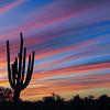 Sentinel Saguaro