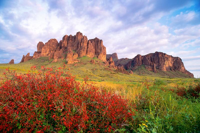 Superstition Mountains, Crismon Flower Lost Dutchman St Park