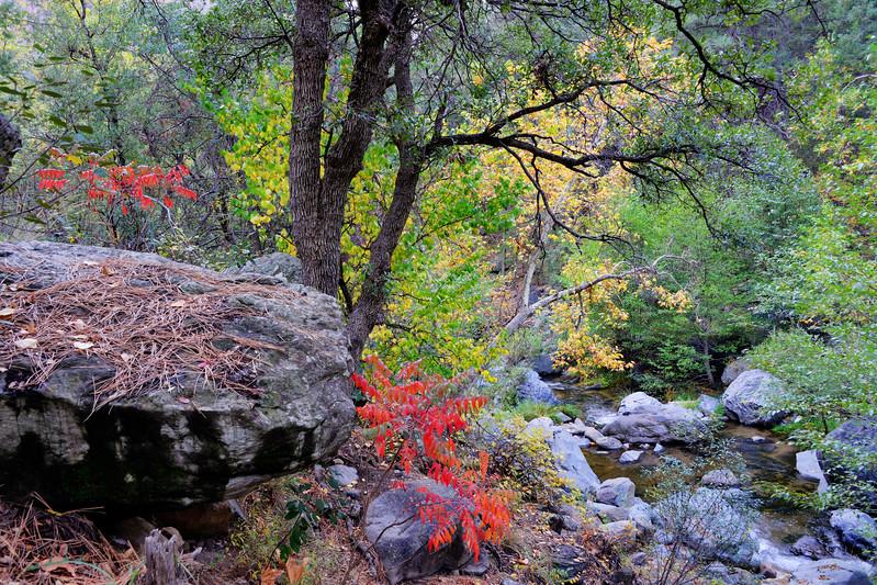 Fall colors on Oak Creek, Sedona AZ