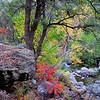 Fall colors on Oak Creek, Sedona AZ