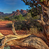 View of Cathedral Rock thru Twisted Pine, Sedona AZ