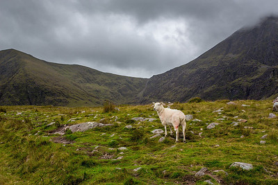 Sheep at the base of the Devil's Ladder