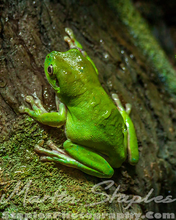 Very Green Frog