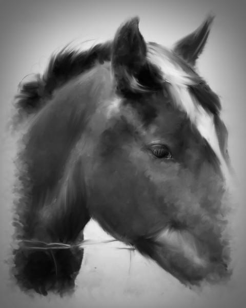 Mocha in Black and White